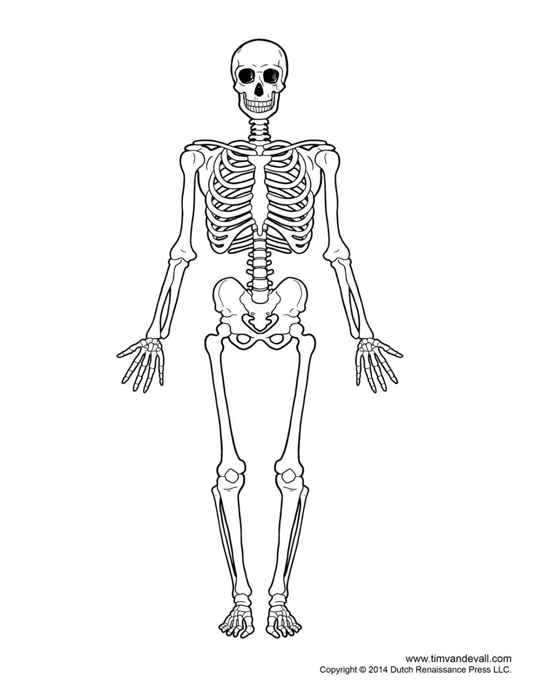 Skeleton Image