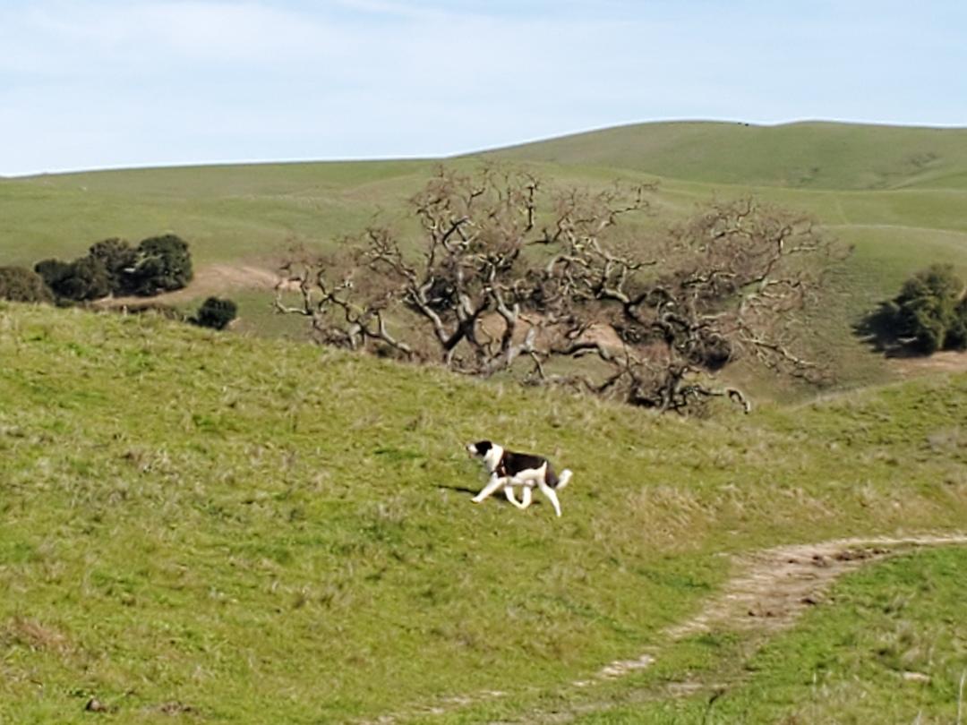 Bodie on Hike