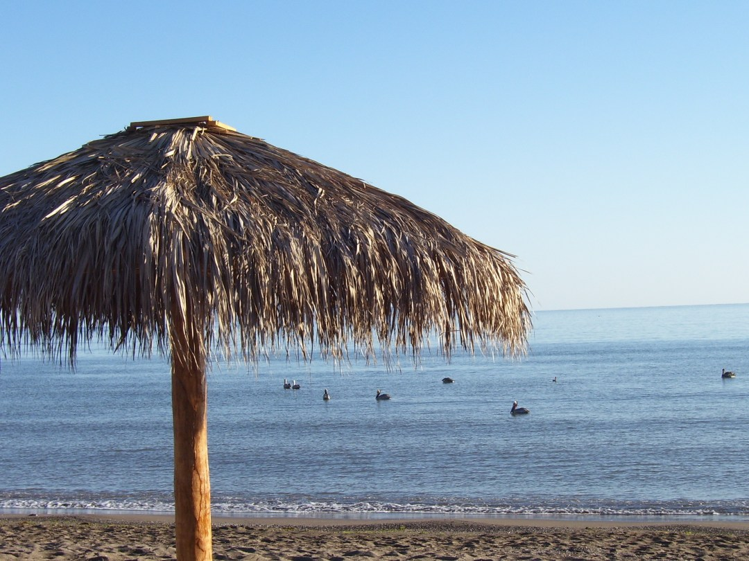 Palapa with Pelicans